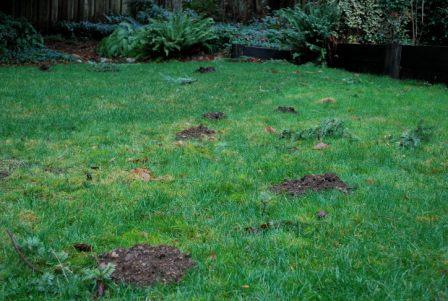 Moles Infest Kelly Carpenter's Backyard