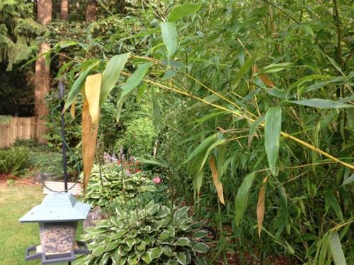 bamboo_comp